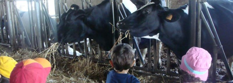 Fattoria salvucci family welcome for Porte francesi della fattoria