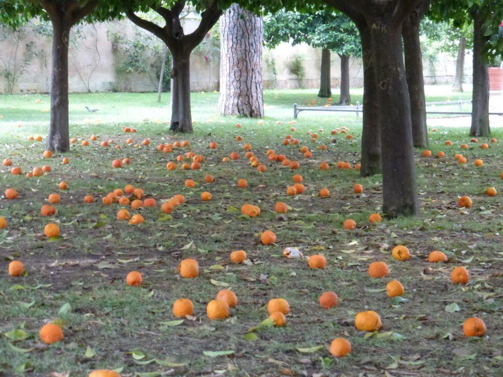 Giardino degli aranci family welcome - Giardino degli aranci frattamaggiore ...